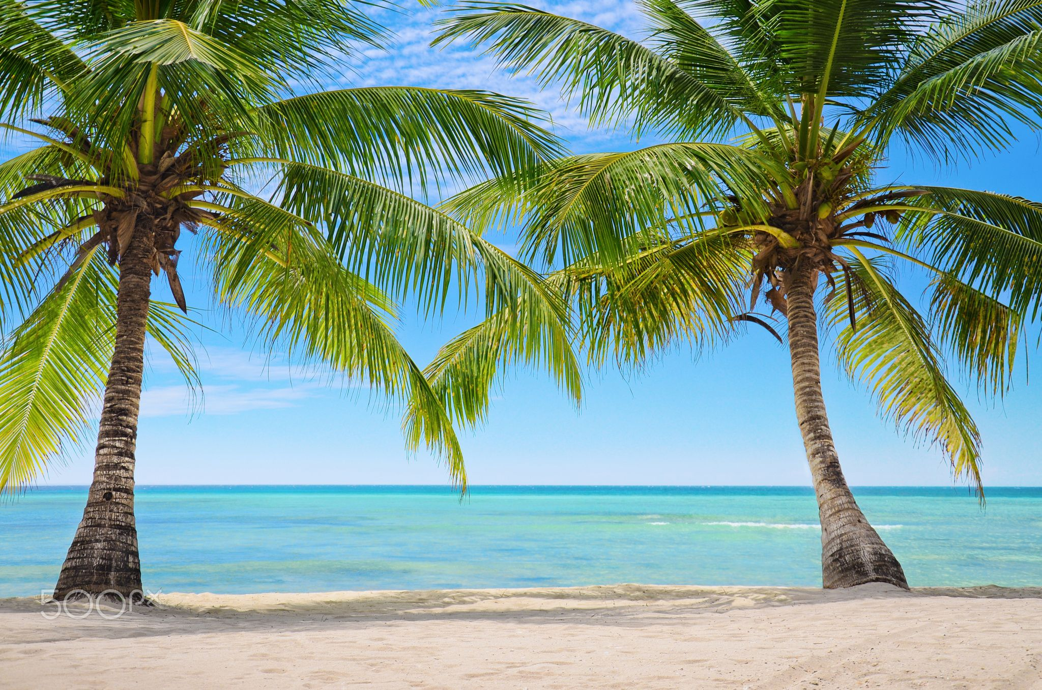 Palm trees on the background of a beautiful carribean sea - Two Palm ...