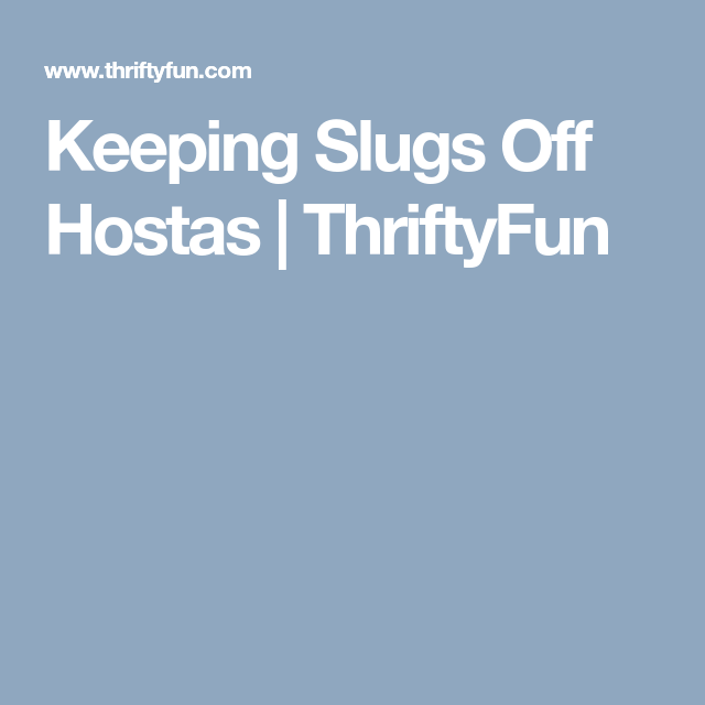 Keeping Slugs Off Hostas Thriftyfun Funky Garden Art Pinterest And Gardens