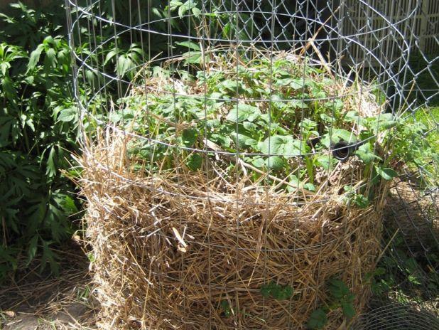 rendements records avec la tour pommes de terre permaculture gardens and vegetable garden. Black Bedroom Furniture Sets. Home Design Ideas