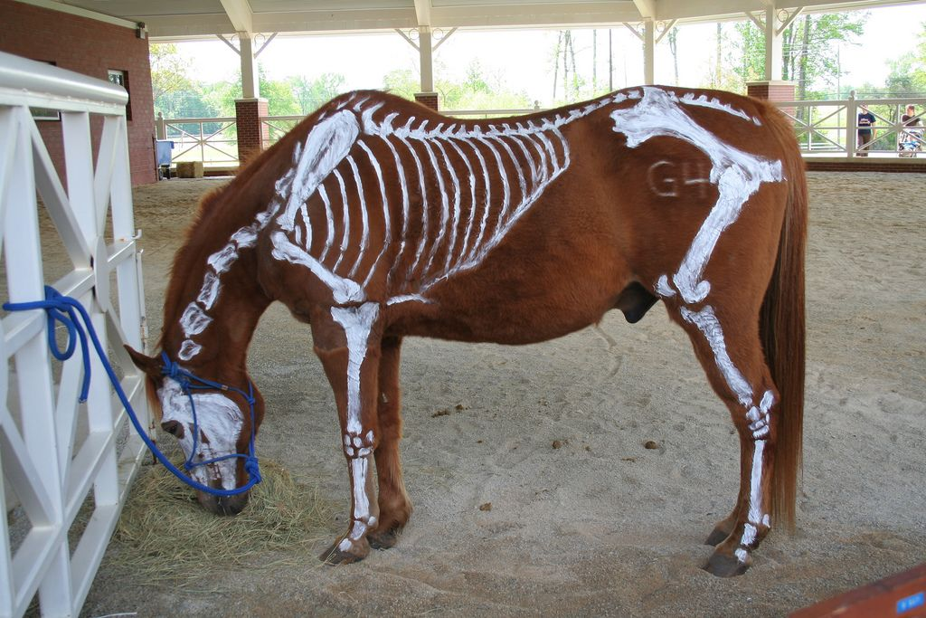 Texas A's Vet School does this every year for their open house ...