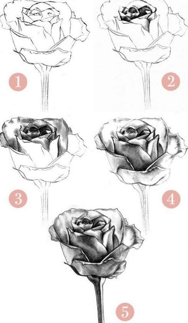 50 Easy Flower Pencil Drawings For Inspiration Drawings