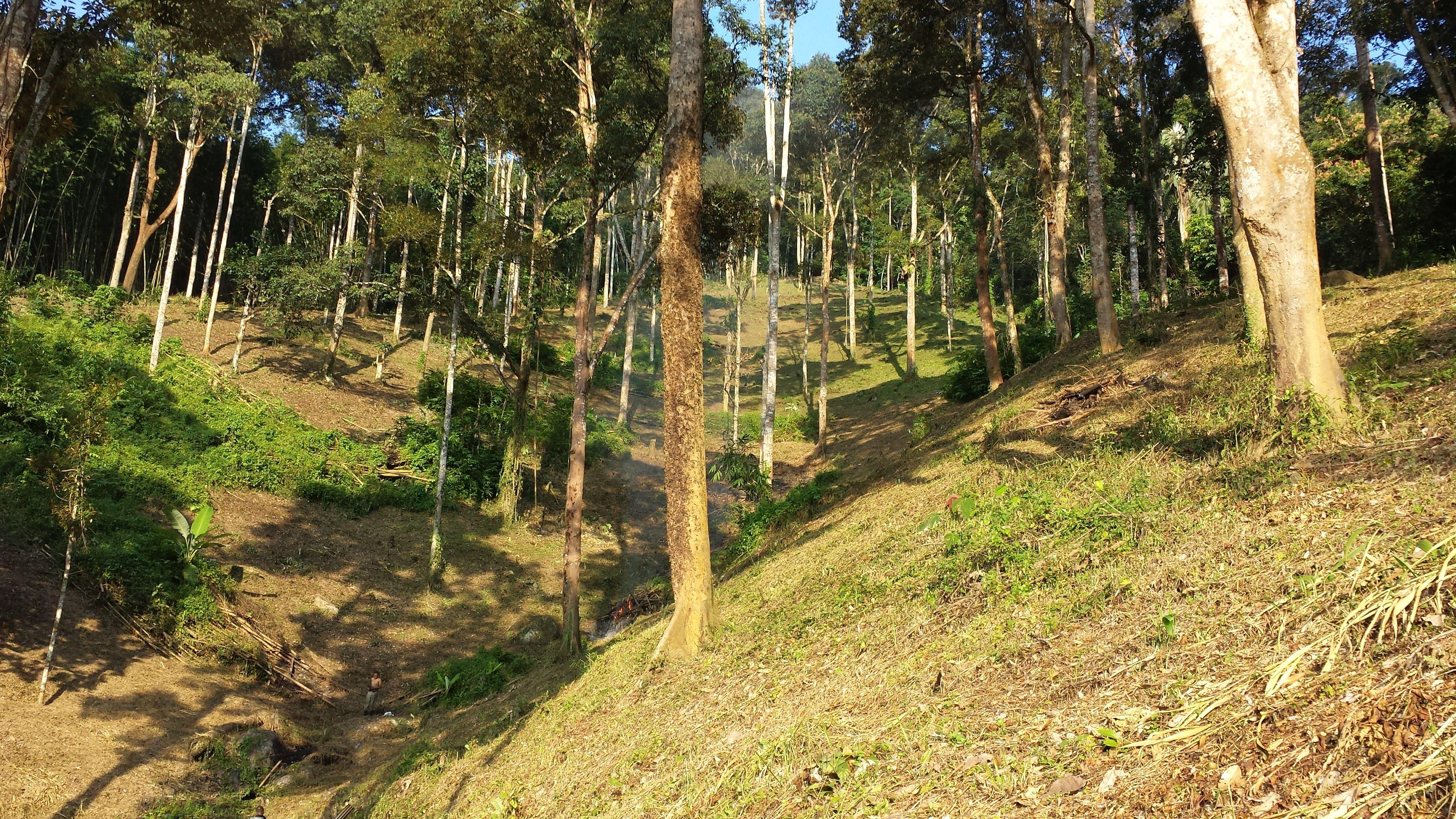 Pin by RESTU ANNISA AMIR on RESTU'S DURIAN FARM HULU