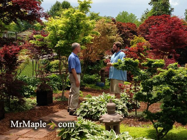 Garden Design With Only Japanese Maples garden Pinterest