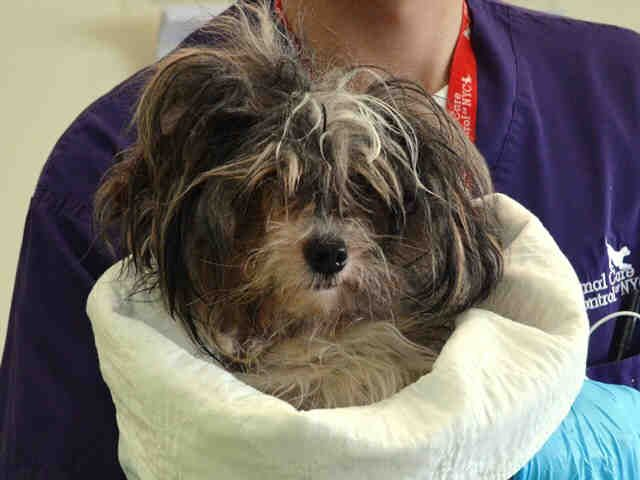 Starburst A1033086 Dogs Animals Nyc Dogs