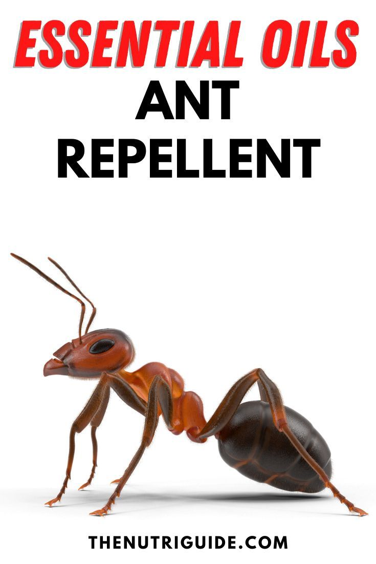 Essential Oils Ant Repellent In 2020 Essential Oils Ants Ant Repellent Peppermint Oil For Ants