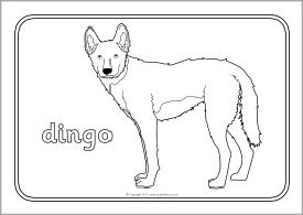 Australian Animals Colouring Sheets SB9002