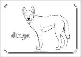 Australian Animals Colouring Sheets SB9002