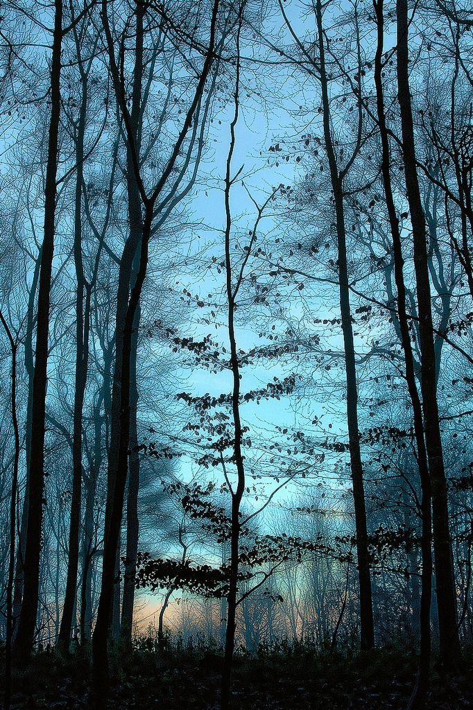 "lanatura: ""First Light"" (by Bob Fryer) - Into My Mind's Eye"