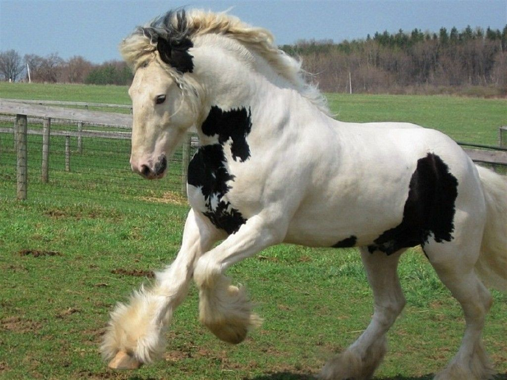 Cool Wallpaper Horse Tinker - 444ee9abcf4daab2a1d8f80499d7ca99  Pictures_142279.jpg