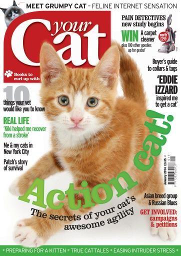 Your Cat Magazine Cat Magazine Animal Magazines Cats
