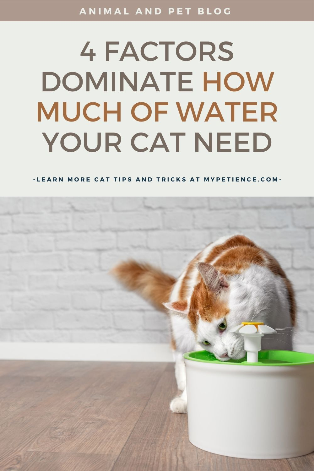 How Long Can A Cat Go Without Water And Food In 2020 Sick Cat Cat Illnesses Pet Mom