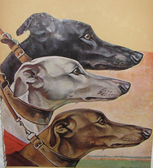 Greyhound Dog Paul Bransom artwork 1950's Racing Greyhounds retro 50's Dogs Color Copy Illustration Saturday Evening Post American Artist 6d. $10.00, via Etsy.