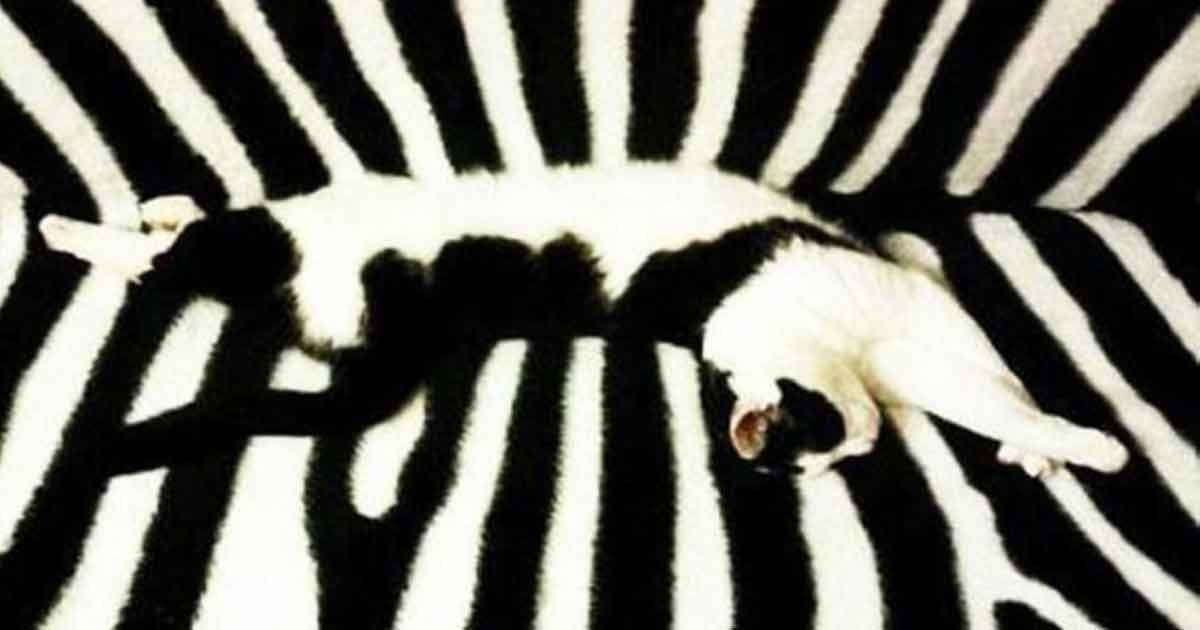 Die 10 am besten getarnten Katzen - http://1pic4u.com/2016/06/06/die-10-am-besten-getarnten-katzen/