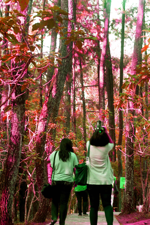 Juanda Forest Park, Bandung Indonesia City, Travel