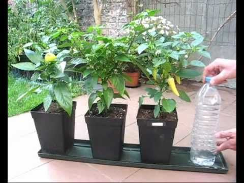 Diy watering tutorial for potted vegetation hydroponics and plants - Self watering container gardening system ...