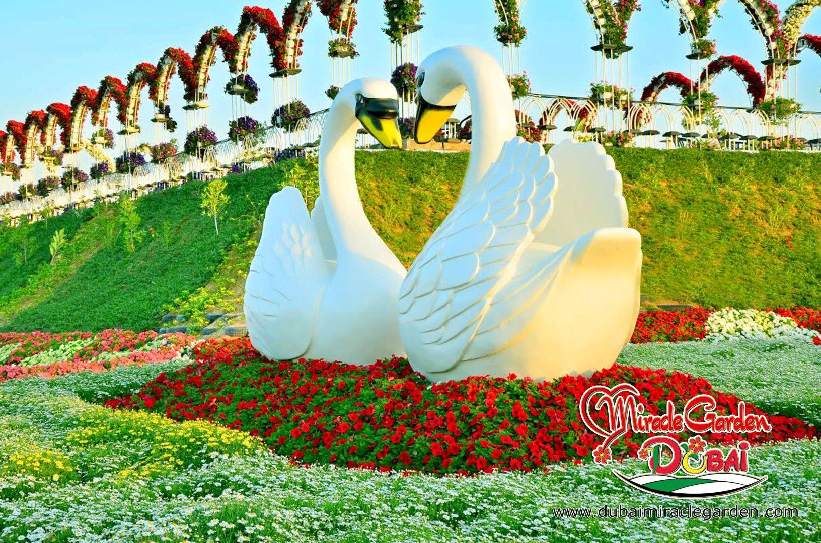 Image from http://cdn.architecturendesign.net/wp-content/uploads/2014/07/Dubai-Miracle-Garden-00.jpg.