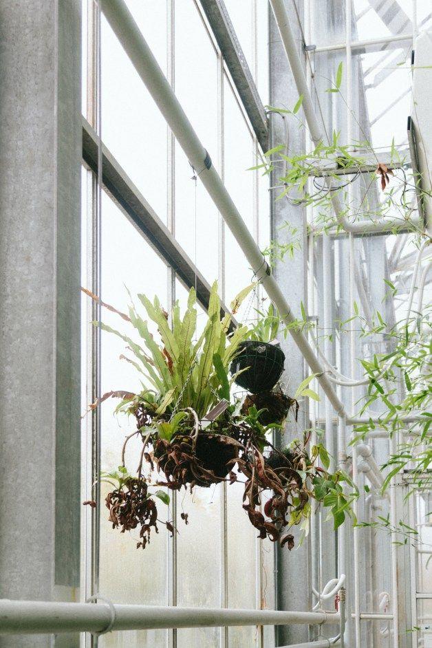 Ideal Hortus Botanicus Amsterdam