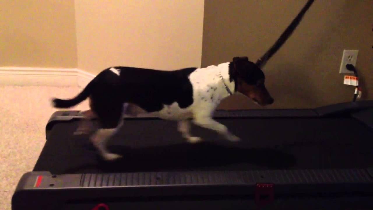 Dog Treadmill Quadruped Tuts Ref Dog Treadmill Dogs Dog