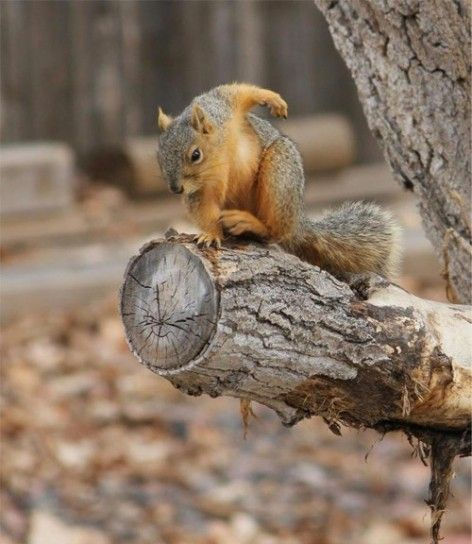 Il super scoiattolo, supereroe definitivo [FOTO]