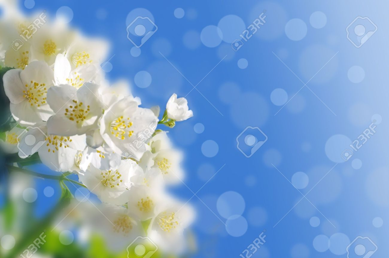 Jasmine blue flowers stock flower images pinterest blue jasmine blue flowers izmirmasajfo