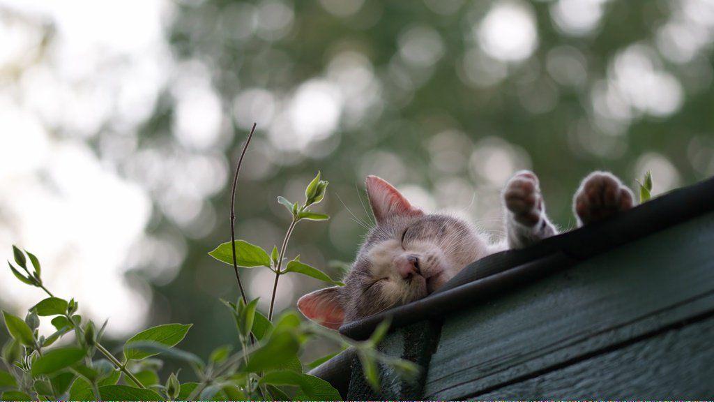Cats Reddit Why Do Cats Purr Cat Adoption Grumpy Cat Humor