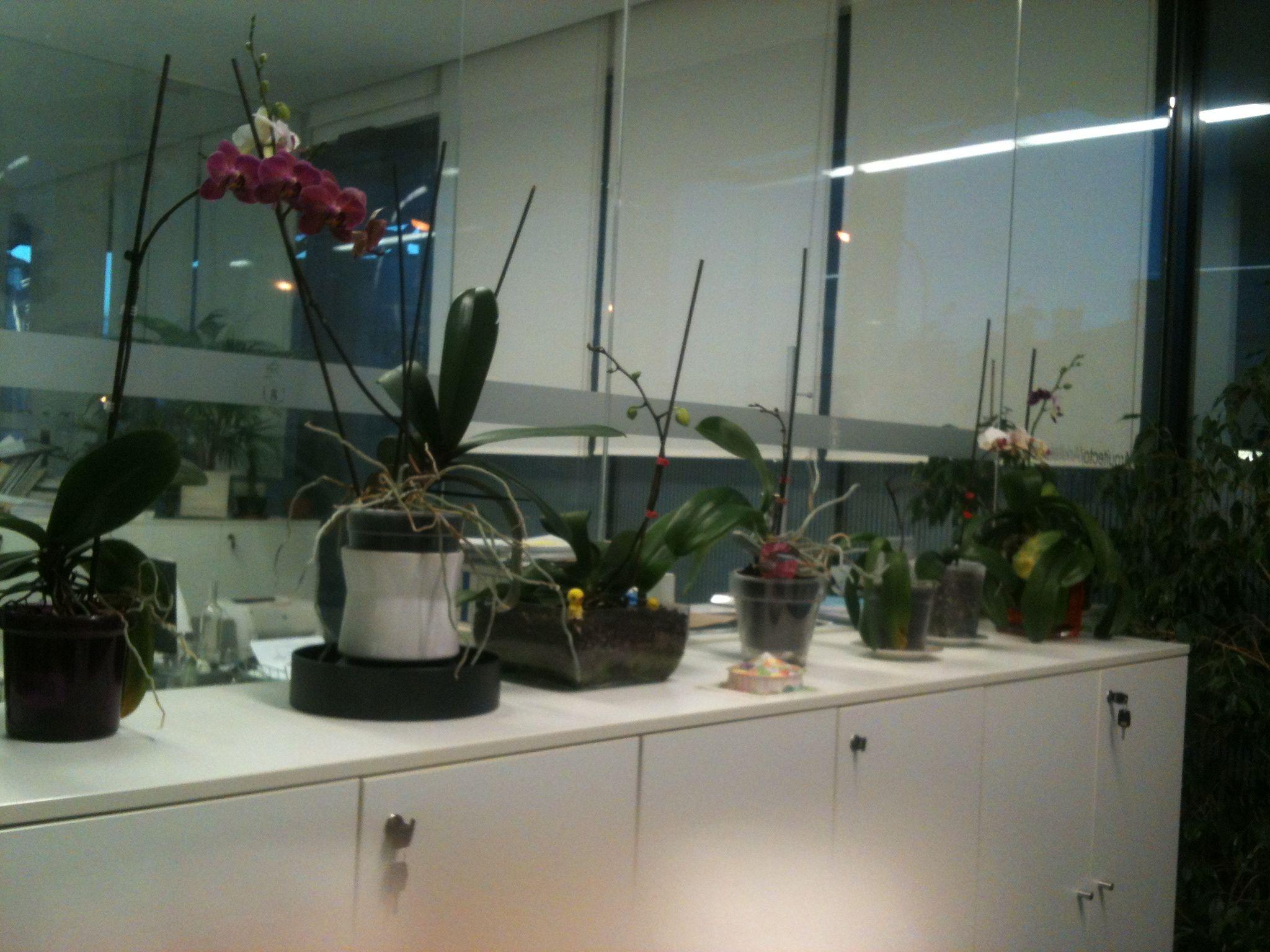 Orquídeas sobre mueble sin flor orquídeas y otras flores pinterest