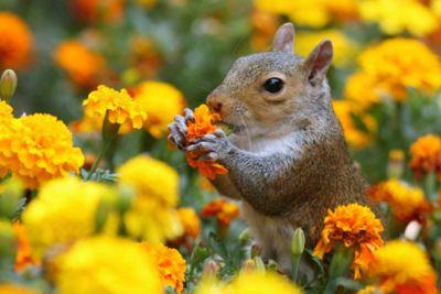 a squirrel flower garden