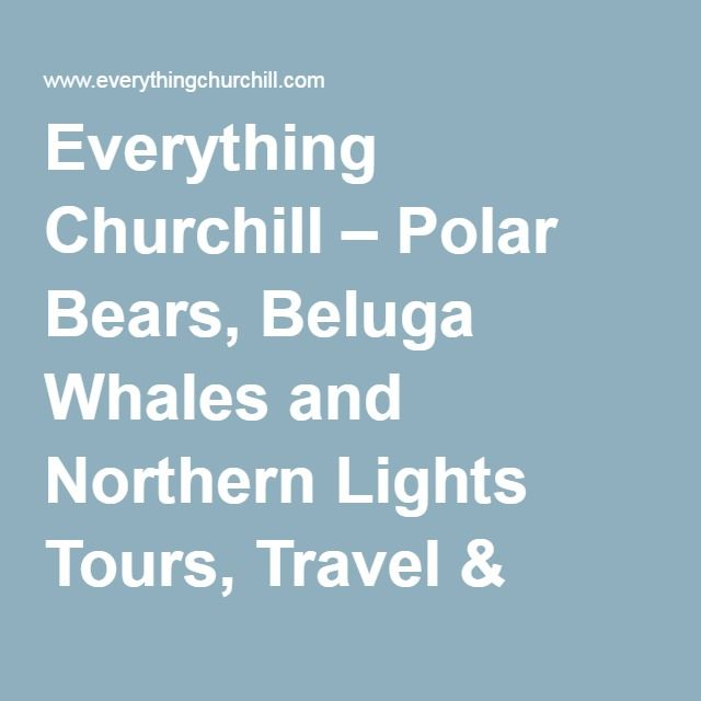 Everything Churchill – Polar Bears, Beluga Whales and Northern Lights Tours, Travel & Hotels