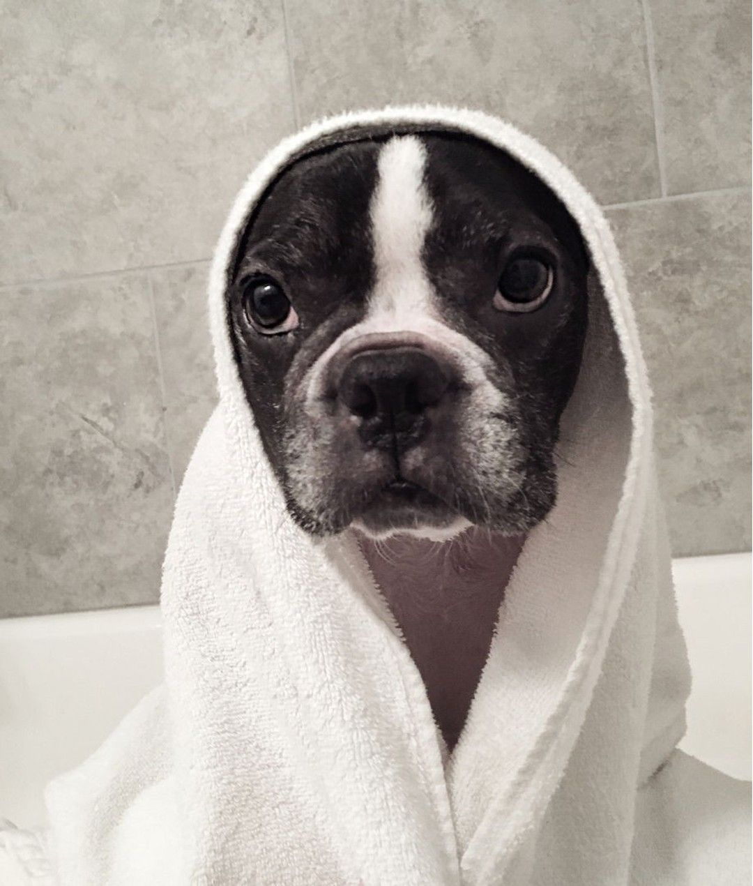 Itchyfrenchie Posted To Instagram Last Night Was Bath Night I