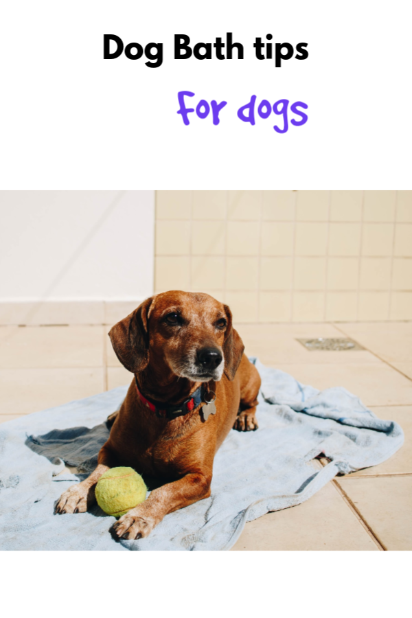 Join Me The Essential Oil Vet For Online Training On How To Keep Your Dog Healthy And Happy Using Essential Oils To Support Them Dogs Dog Bath Oils For Dogs