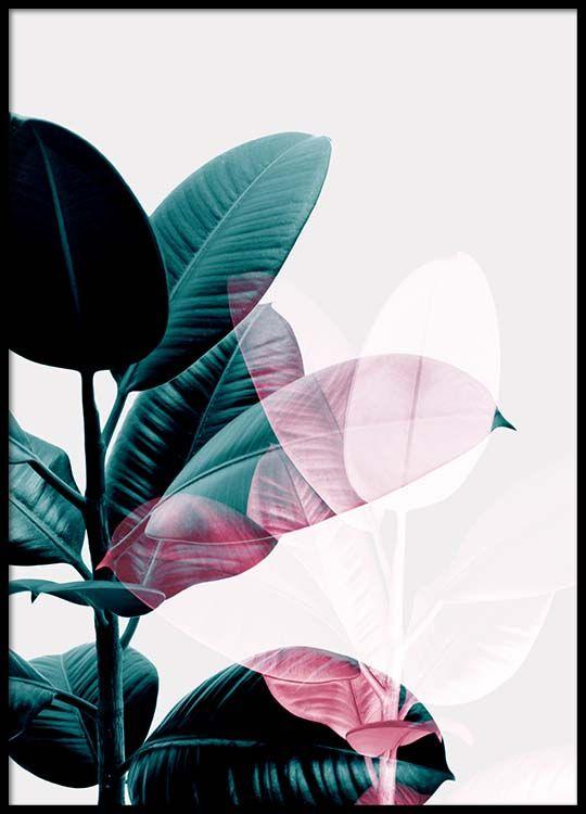 Ficus exposure Julisteet ryhmässä Julisteet  / Kasviaiheiset @ Desenio AB (8988)