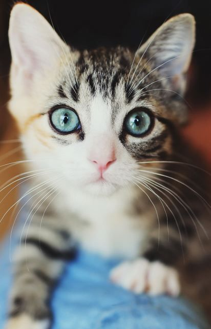 Pin By Isabelle Mohon On Animal Lover Cute Animals Kittens Cutest Pretty Cats