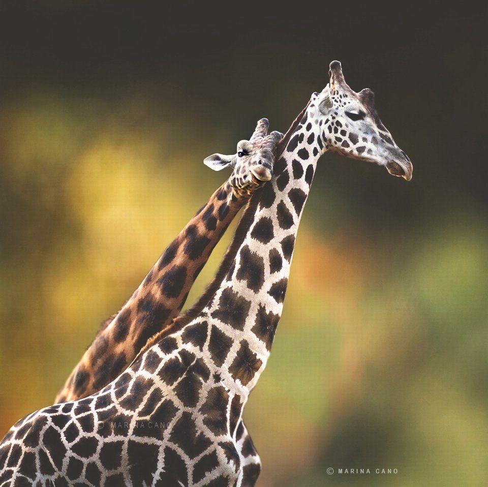 Wild Animals Photos, Animals Wild, Wildlife