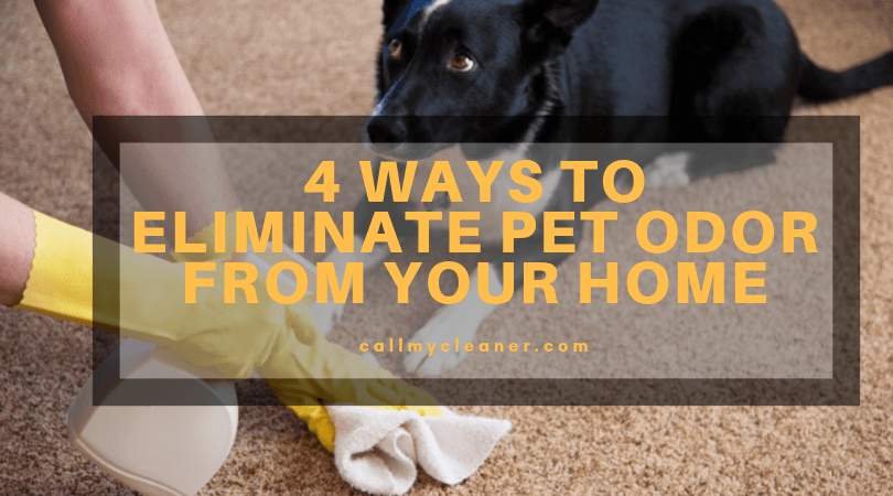 4 Ways to Eliminate Pet Odor From Your Home  There are a variety of items available in the market to get rid of pet stain, it is simple to wind up confounded by the whole process.
