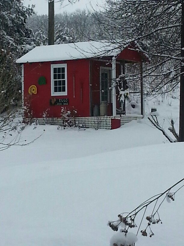 The chicken house turned garden shed... beautiful in the snow