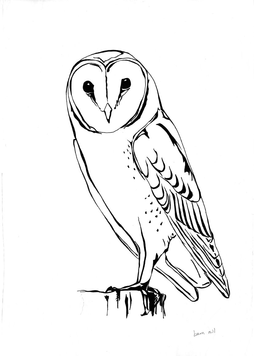 It's just a picture of Revered barn owl coloring page