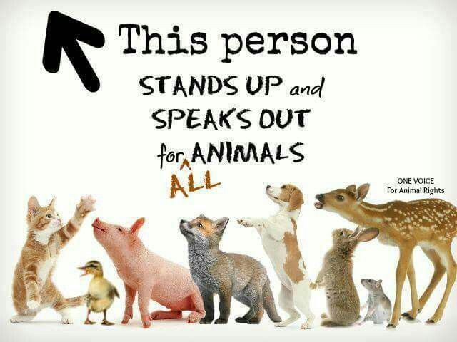 Give animals a voice