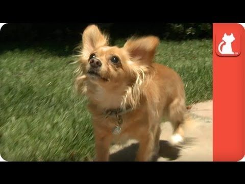 Owner Refuses To Pay 20 To Pick Up Blind Dog At Shelter Tails Of Hope Jake S Story Blind Dog Animal Rescue Stories Dogs