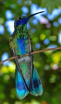 azul e verde, beija-flor em uma vara Banco de imagem - 7570177