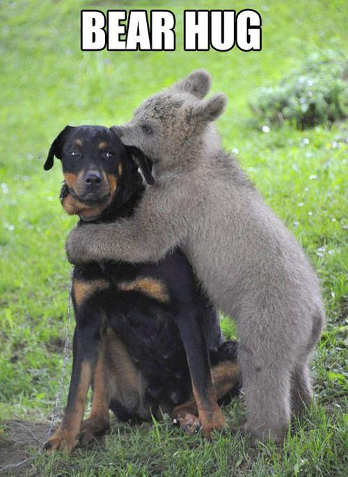 A real bear hug...