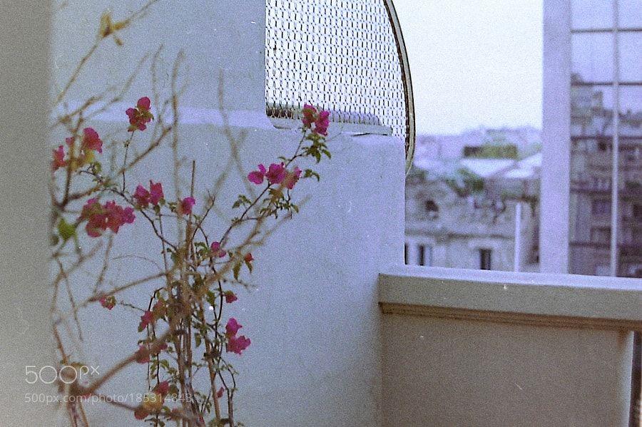 Flores by https://maidsailors.com/