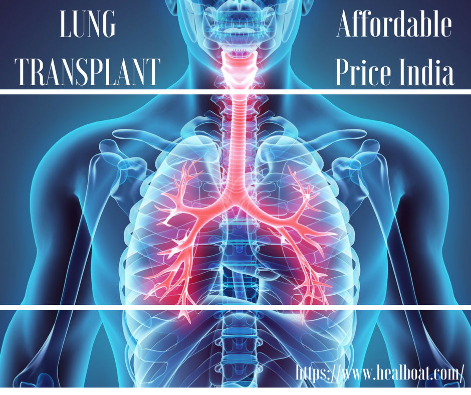 The Lungs Are A Pair Of Spongy Air Filled Organs Located On Either