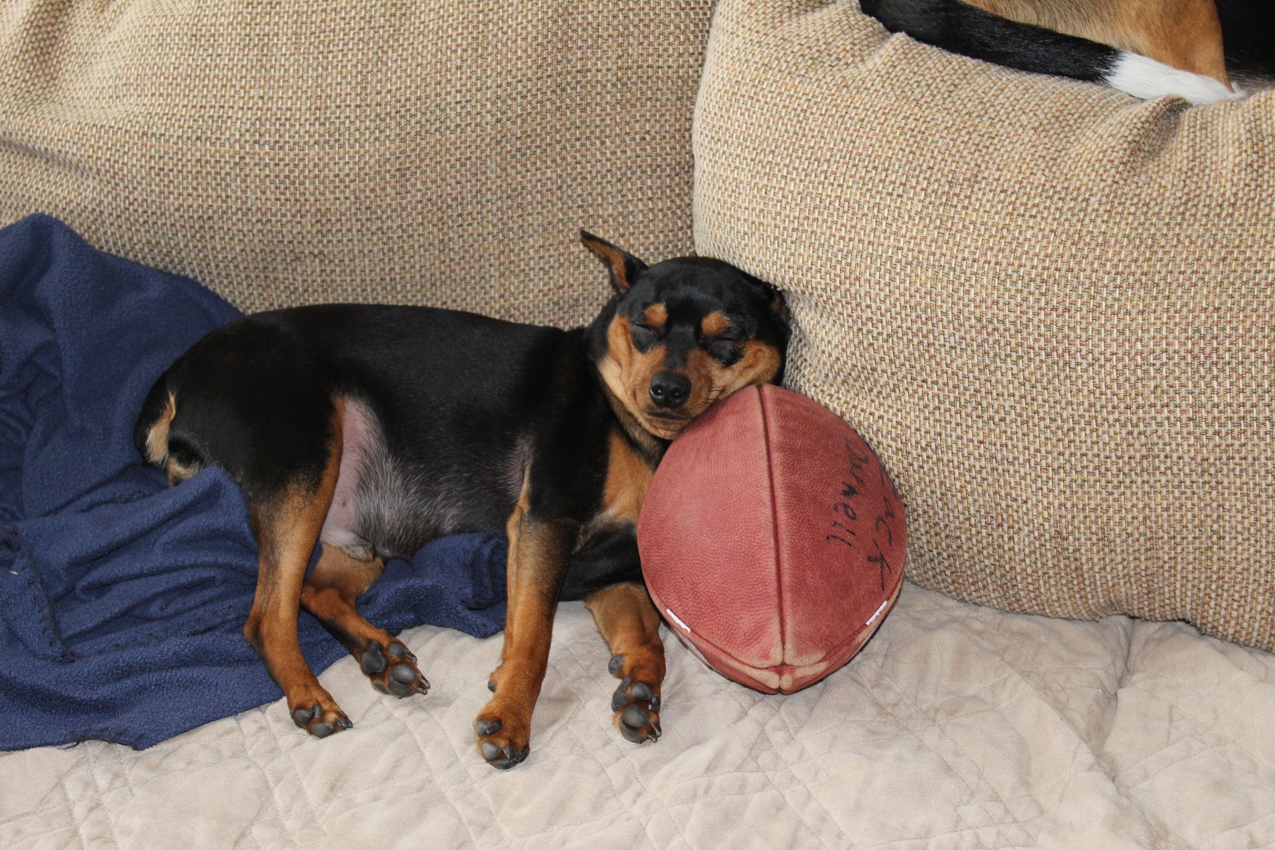Football Makes Me Sleepy Football Funny Sports