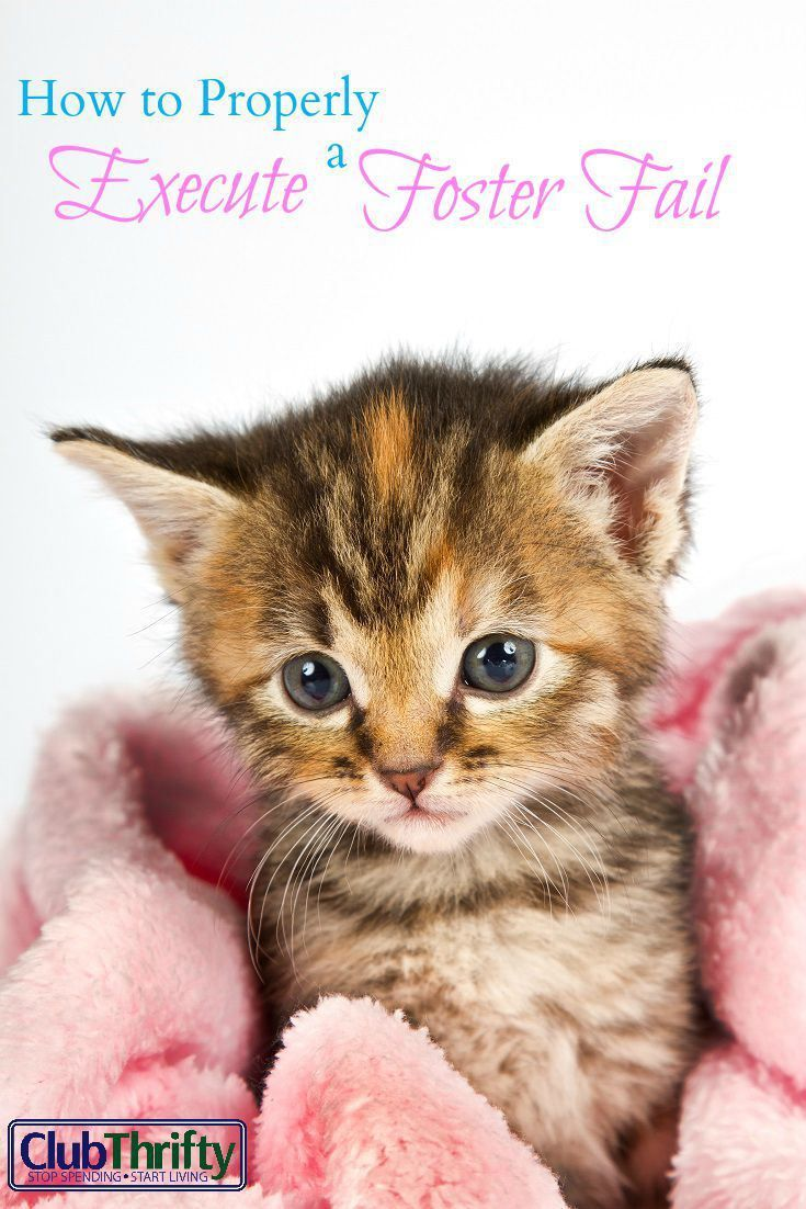 How To Properly Execute A Foster Fail Club Thrifty Small Kittens Cat Training Kitten Care