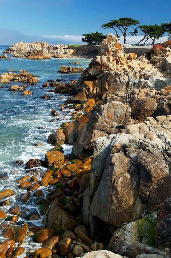 445a7d4eb9971c7abae62453ba22ad3a - Pacific Grove Marine Gardens State Marine