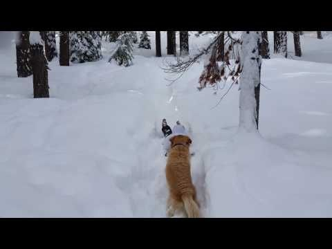 Excited Dog Watching Girl Slide Down Hill On Snow Sled English