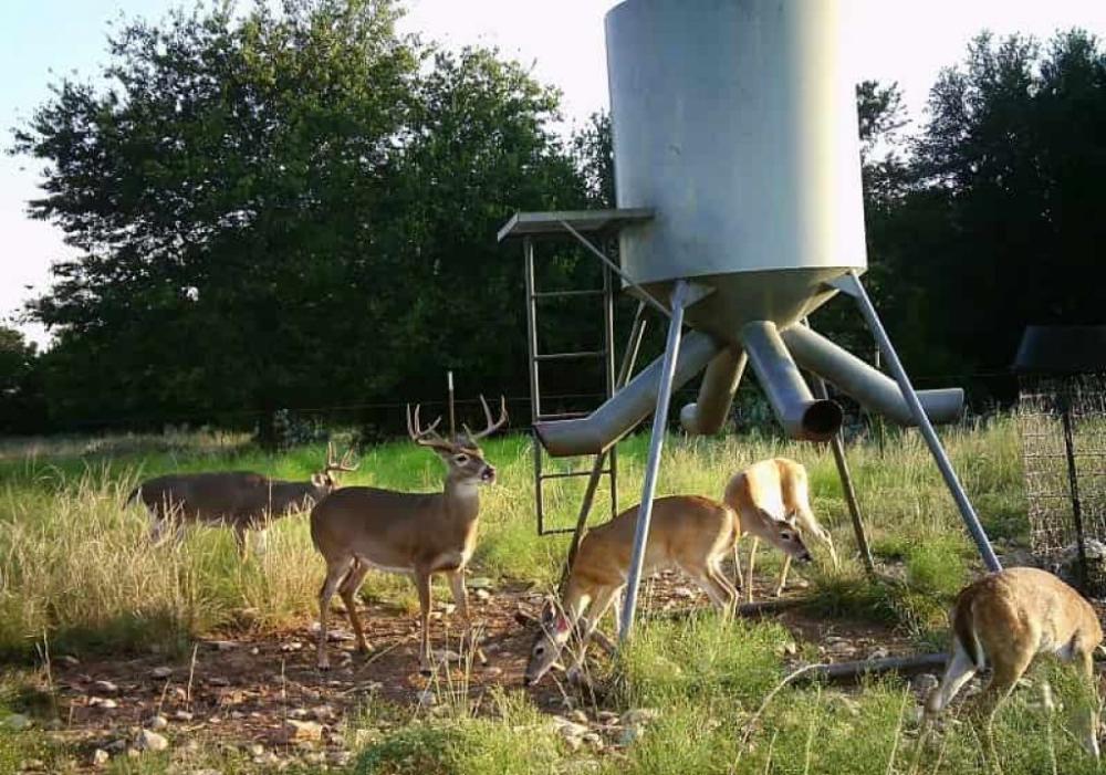 How To Make Deer Feeder Pets Zone in 2020 Deer feeders