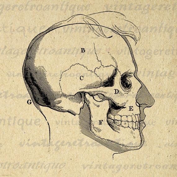 Printable Human Skull Diagram Digital By Vintageretroantique 1234