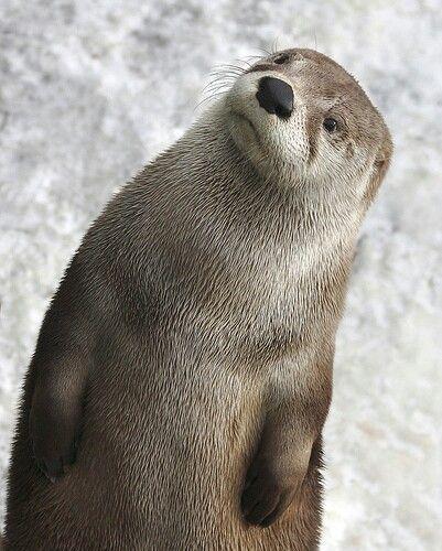 Lovely Otter