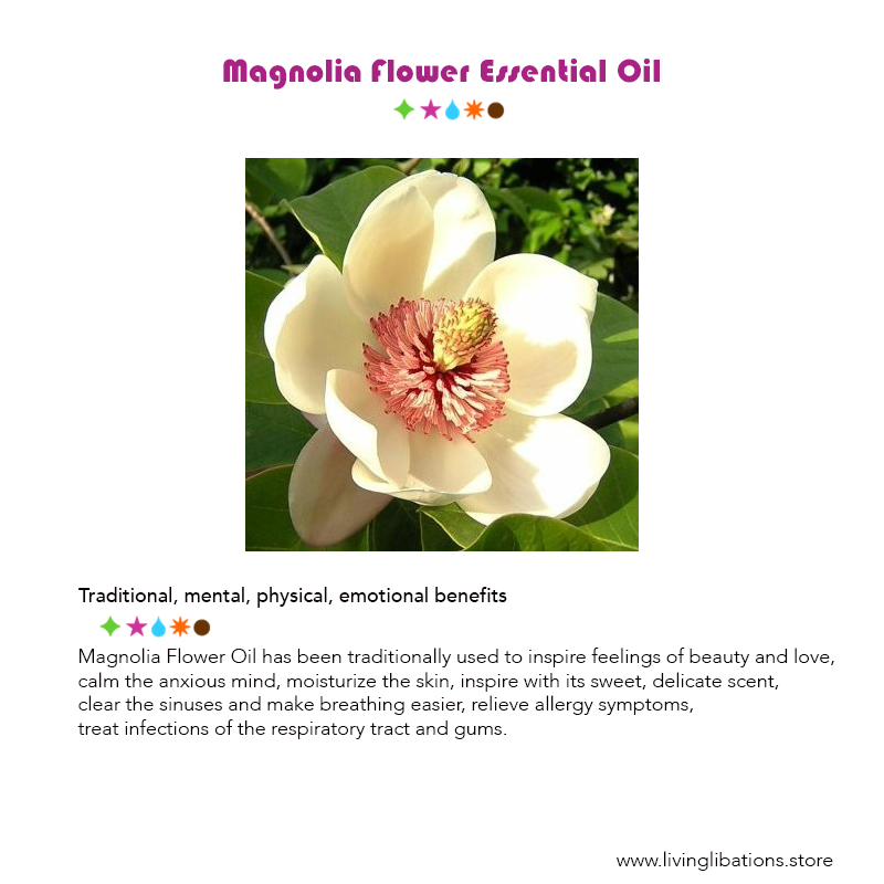 Magnolia flower essential oil living libations living libations magnolia flower essential oil living libations mightylinksfo Image collections